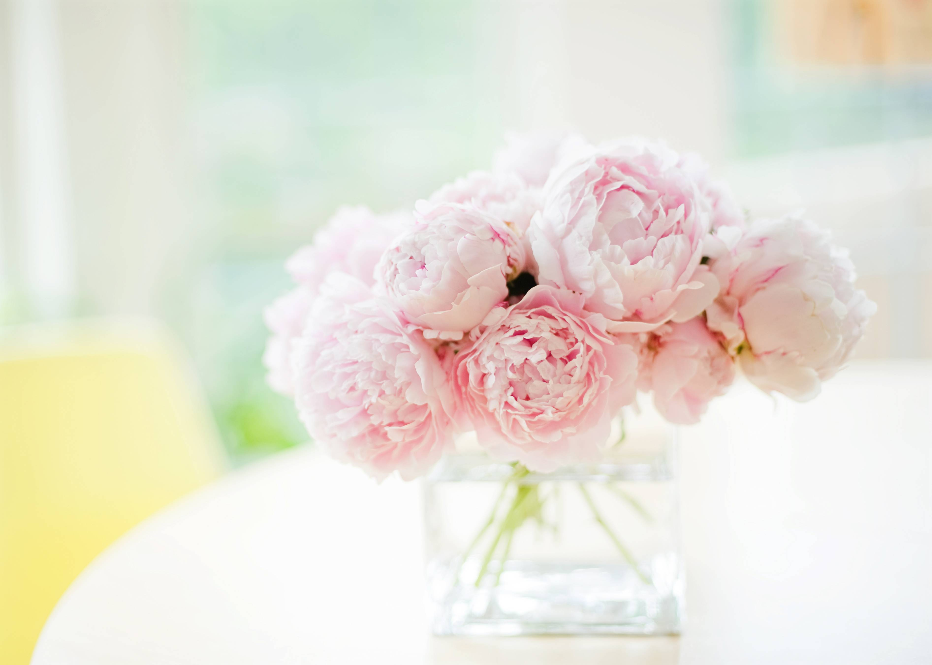 Peony Wallpapers