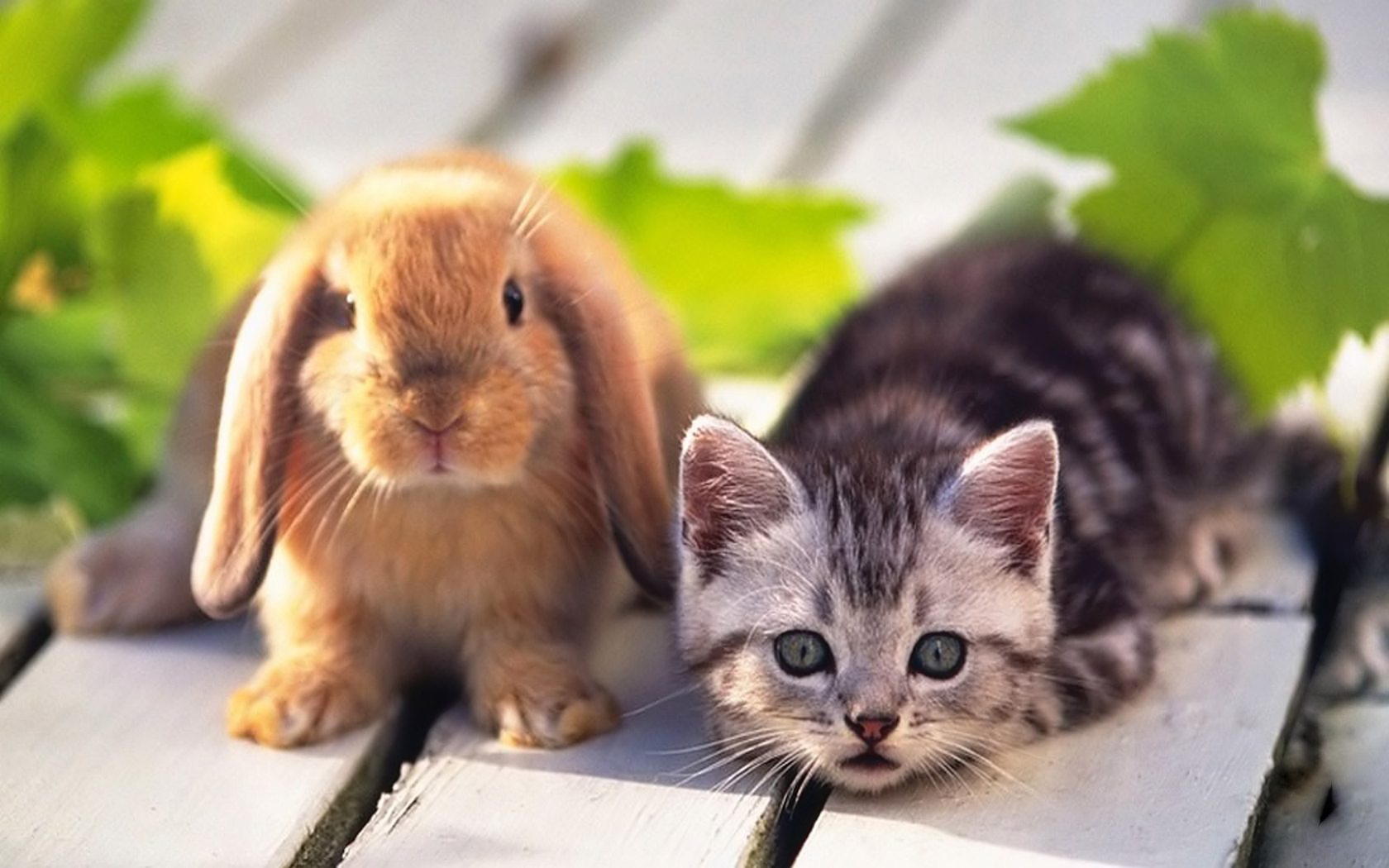 Pets Wallpapers