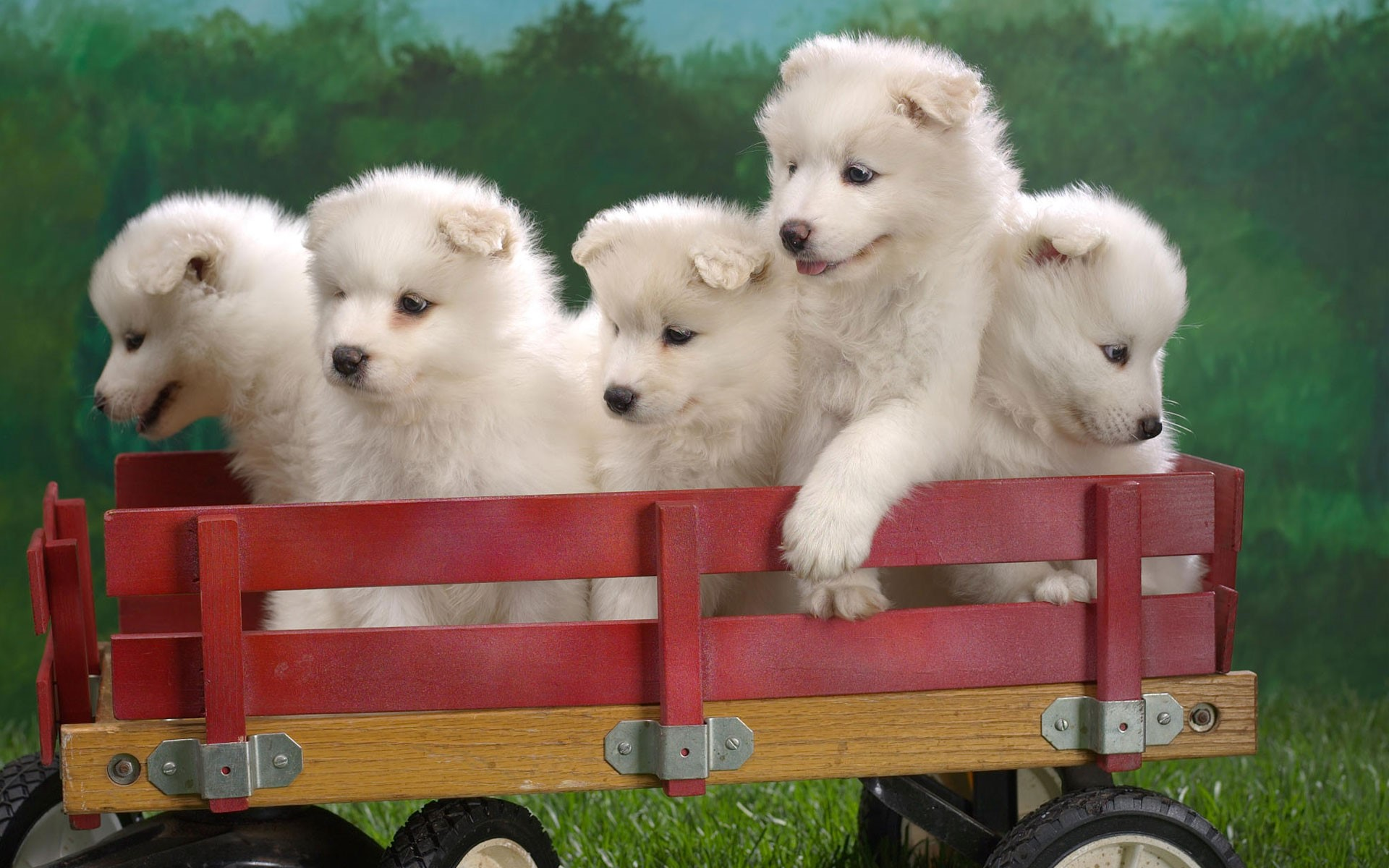 Pets Wallpapers Free Download