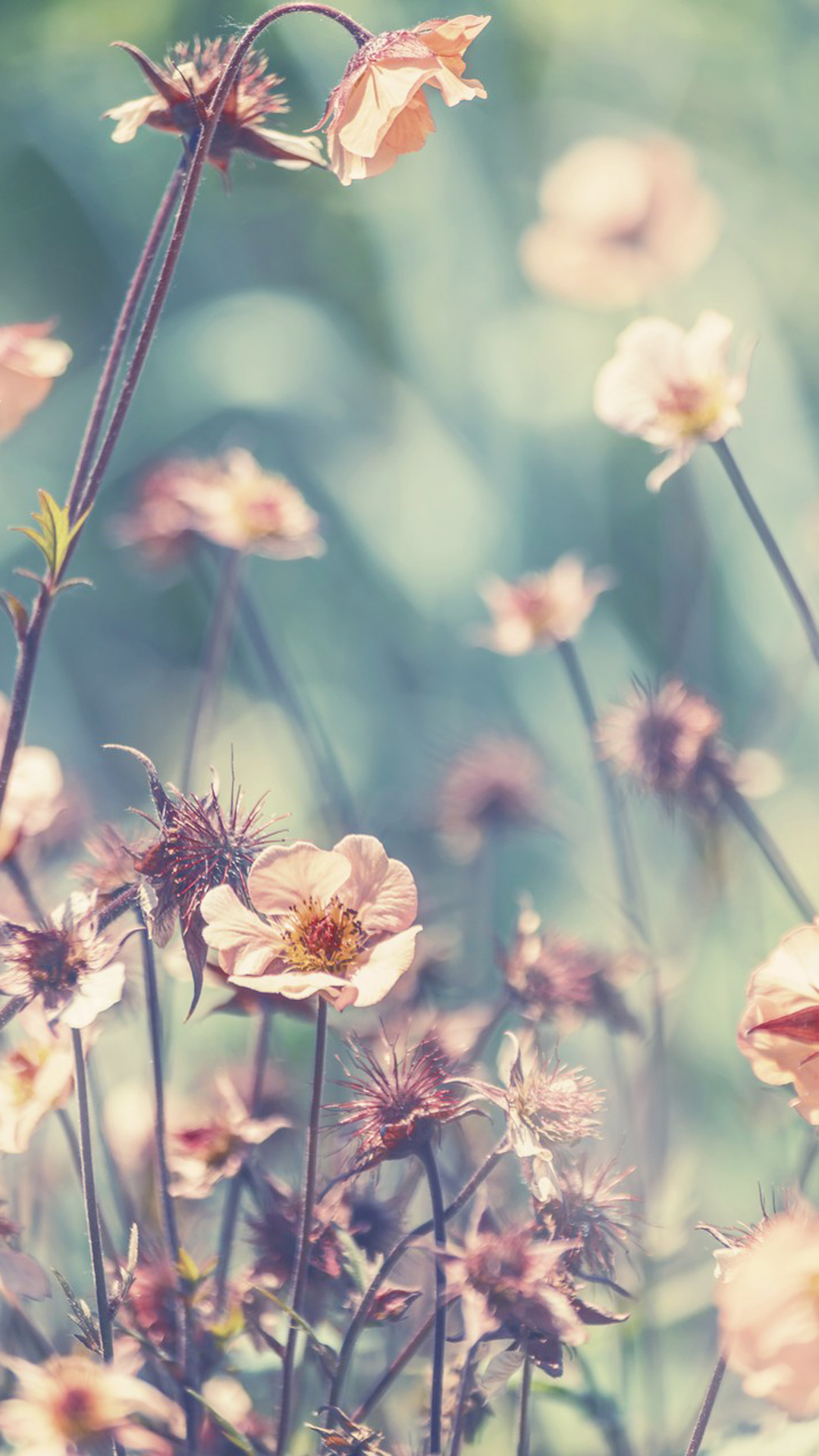 Download phone wallpapers flowers gallery - Flower wallpaper for your phone ...
