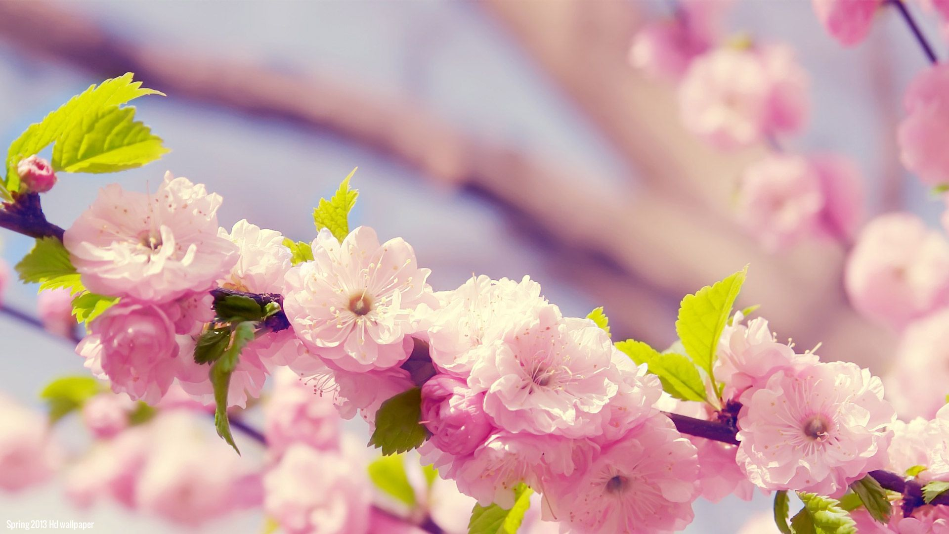 Pictures Of Spring Flowers For Wallpaper