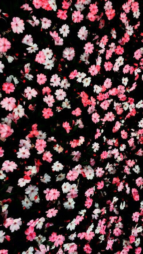 Pink And Black Iphone Wallpaper