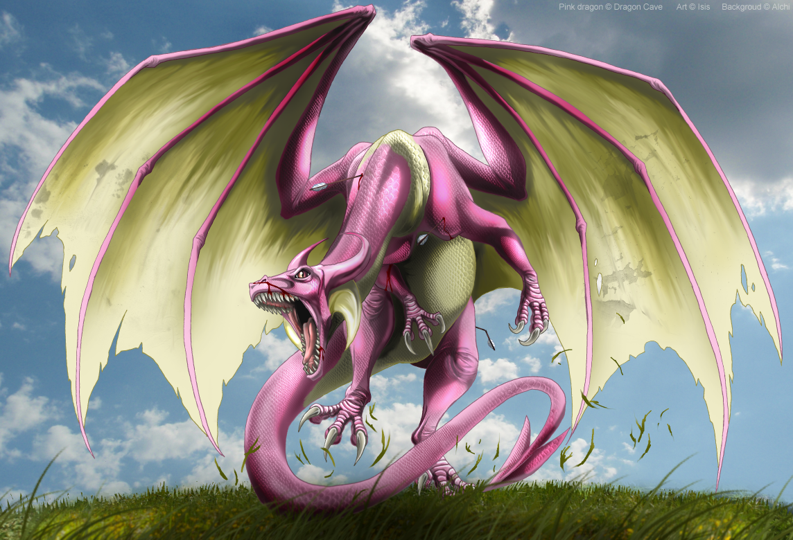 Pink Dragon Wallpaper