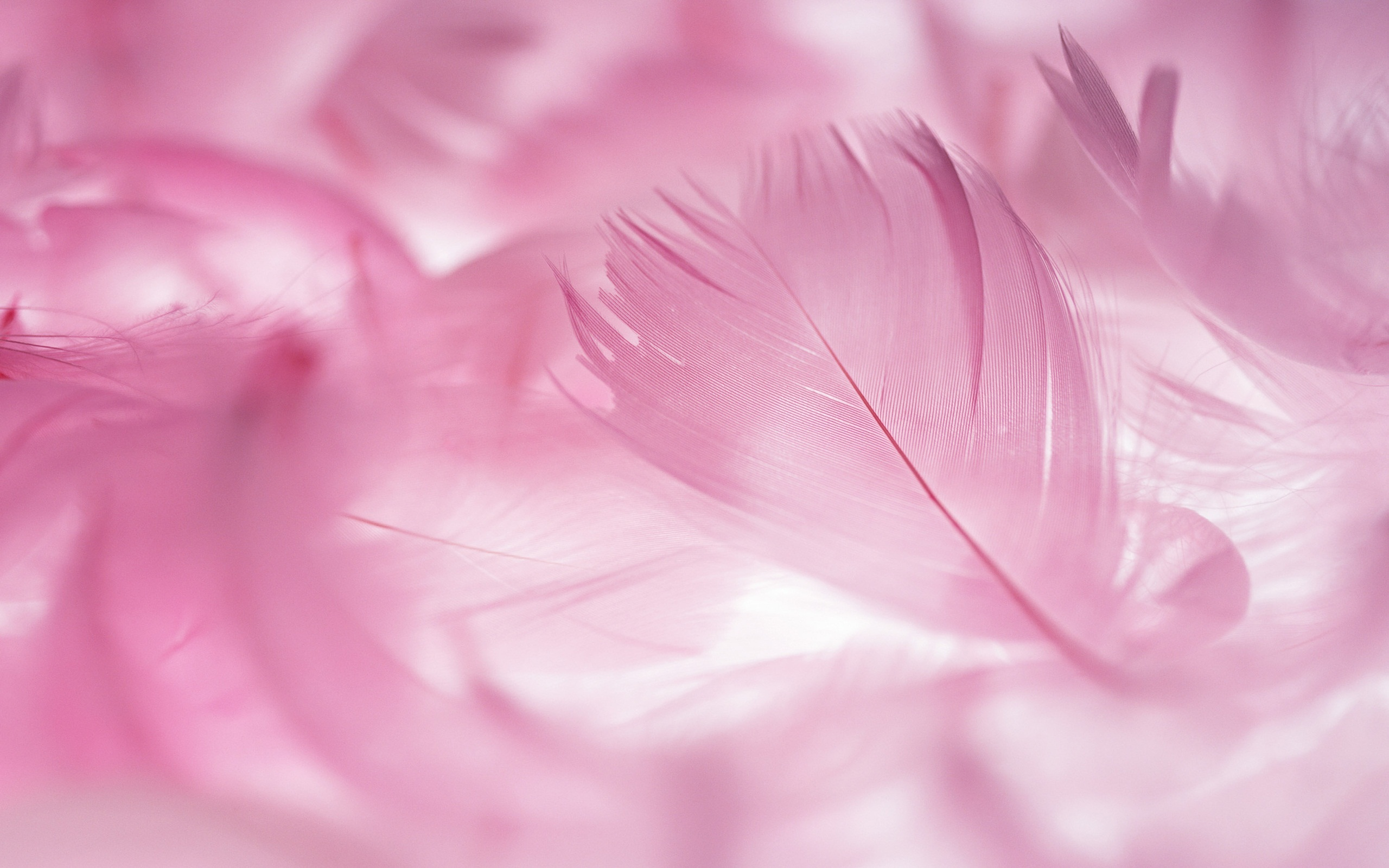 Pink Feather Wallpaper