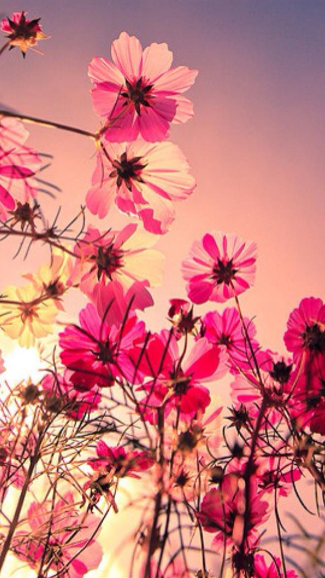 Pink Flower Iphone Wallpaper
