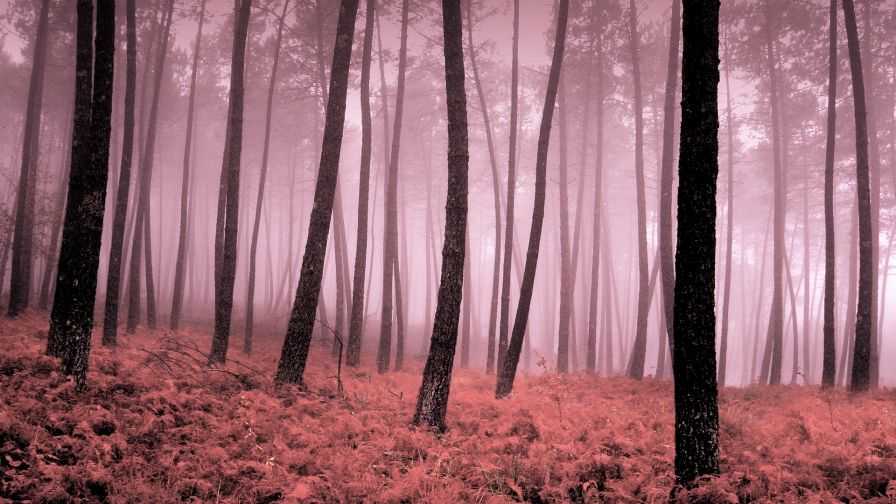 download pink forest wallpaper gallery