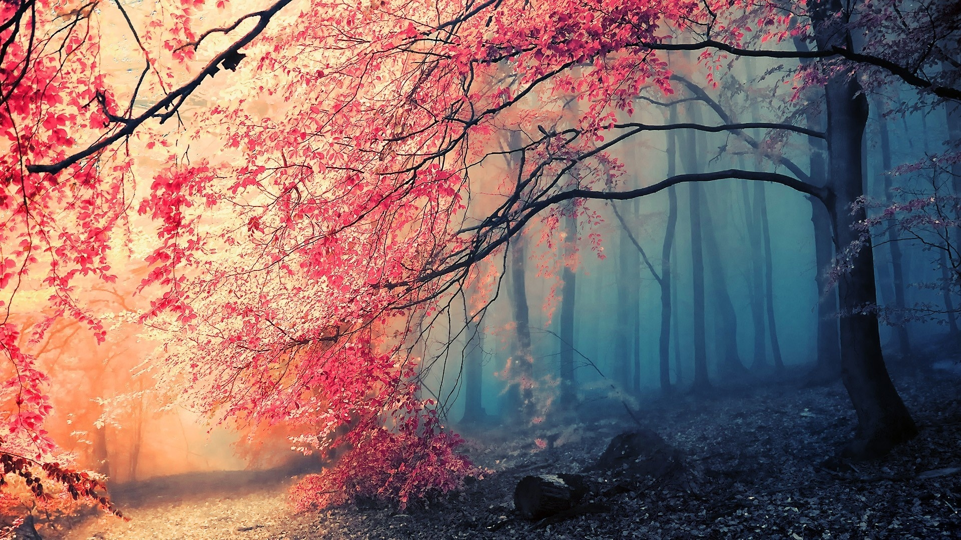 Pink Forest Wallpaper