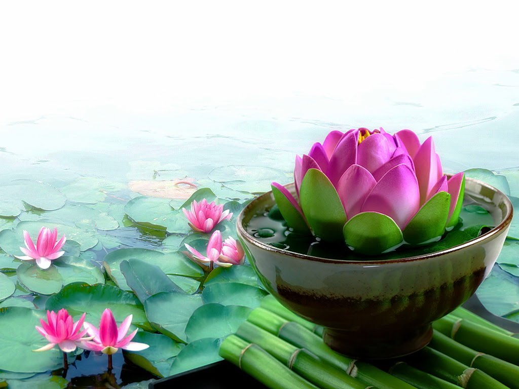 Pink Lotus Wallpaper