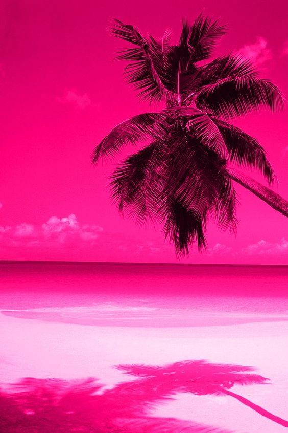 Pink Palm Tree Wallpaper