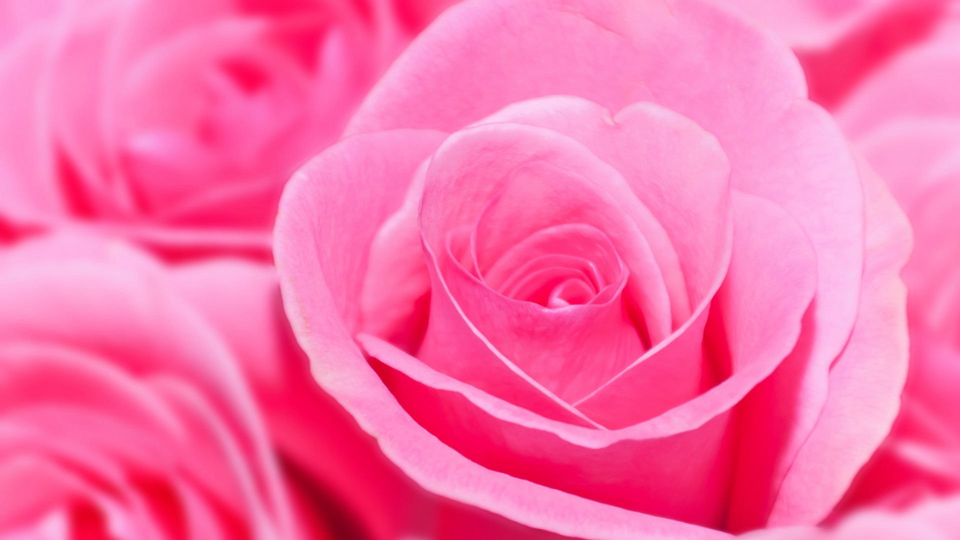 Rose Wallpapers For Desktop Full Size Hd 1080P 11 HD Wallpapers ...