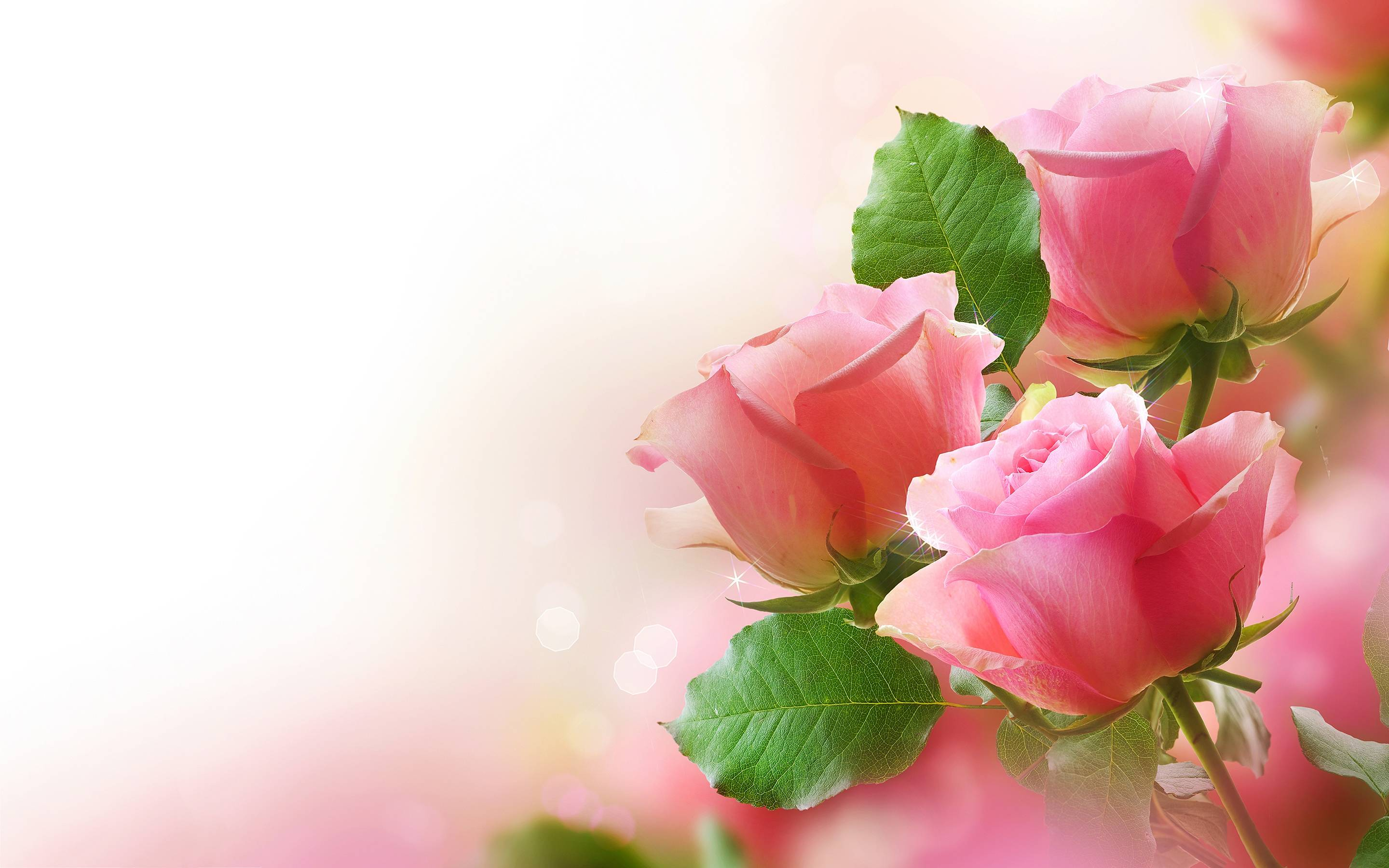 Pink Roses Background Wallpapers