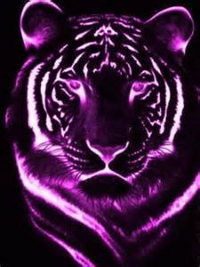 Tiger Animal Wallpaper 3d