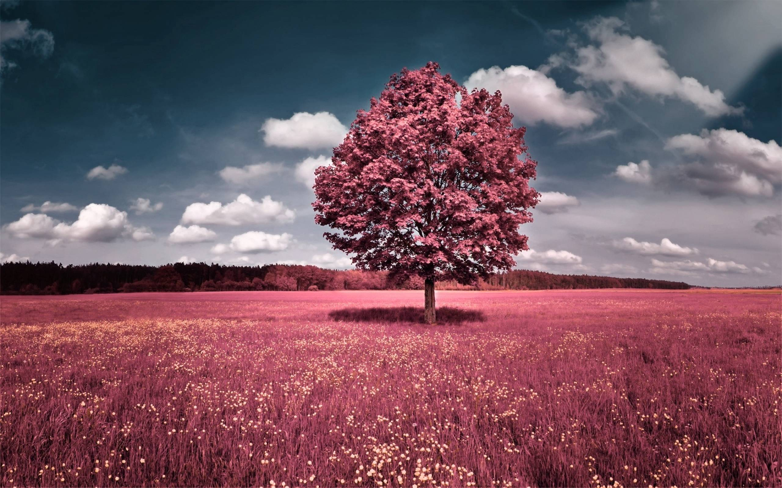 Pink Trees Wallpaper