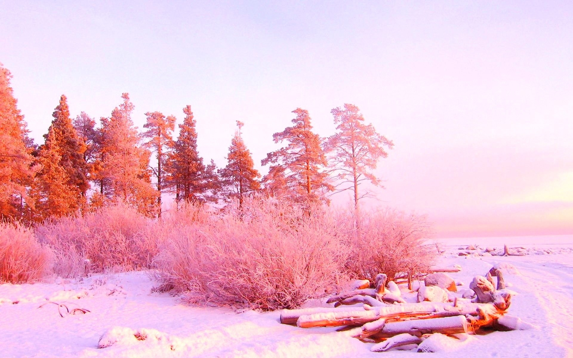 Pink Winter Wallpaper