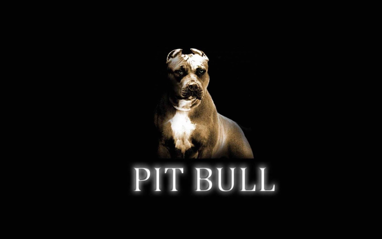 Pitbull Dog Wallpaper