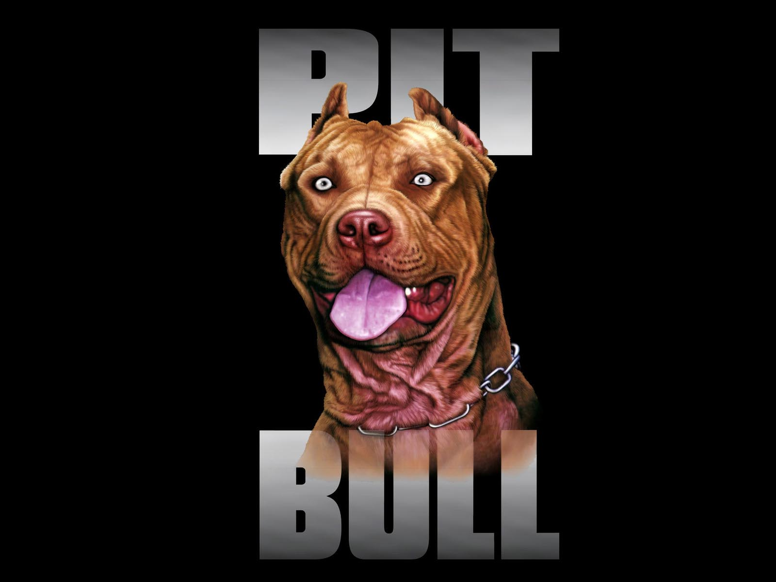 Red nose pitbull dogs wallpaper
