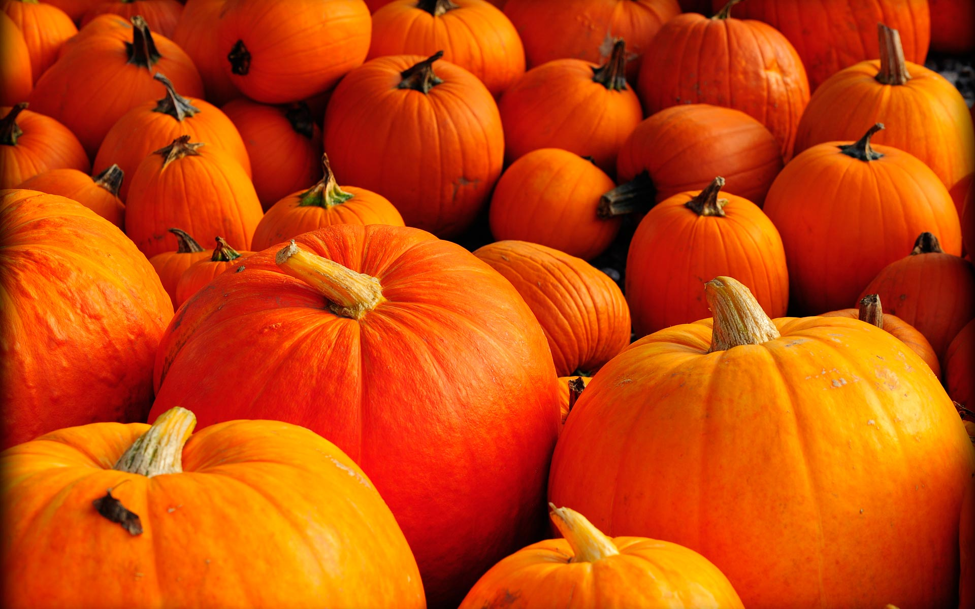 Pumpkin Desktop Wallpaper Free
