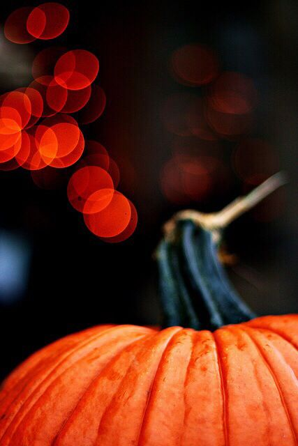 Pumpkin Wallpaper For Iphone