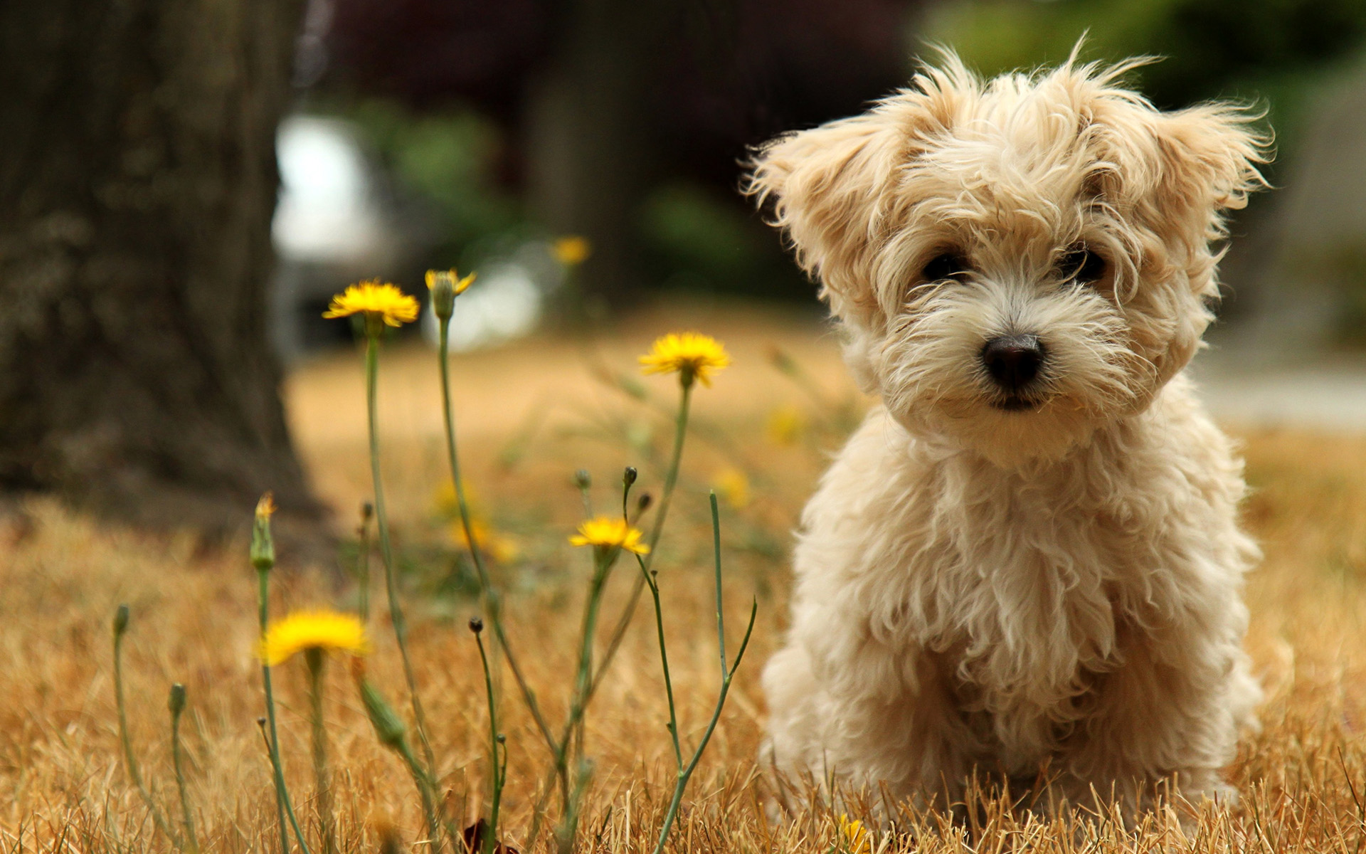 Puppies Wallpapers HD