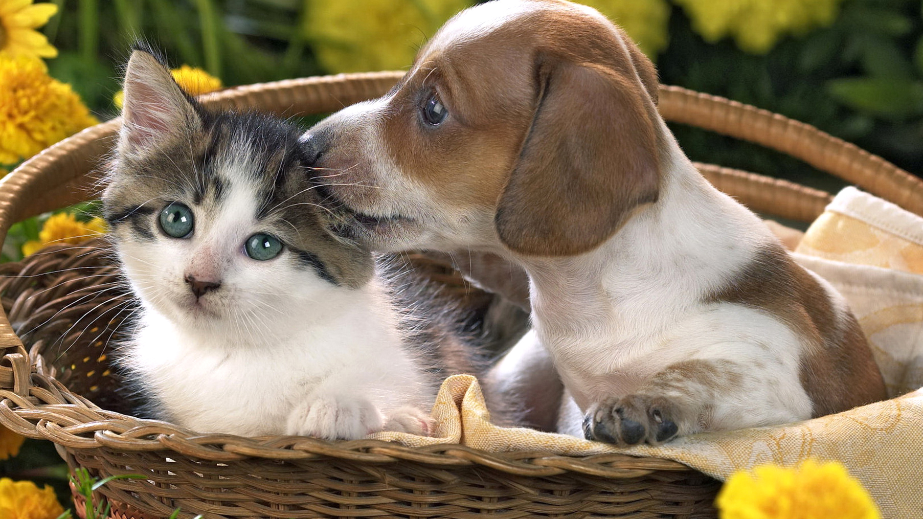 Download Puppy And Kitten Wallpaper Gallery