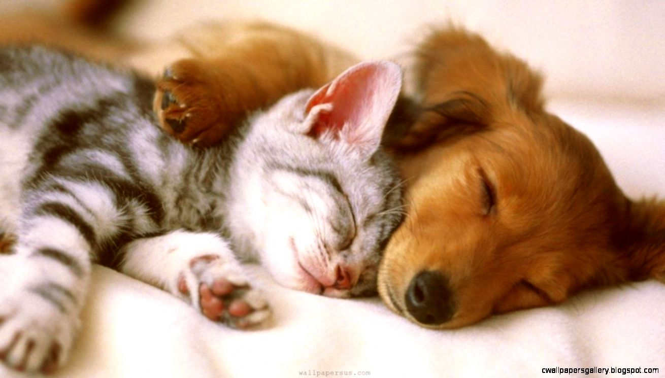 Puppy And Kitten Wallpapers