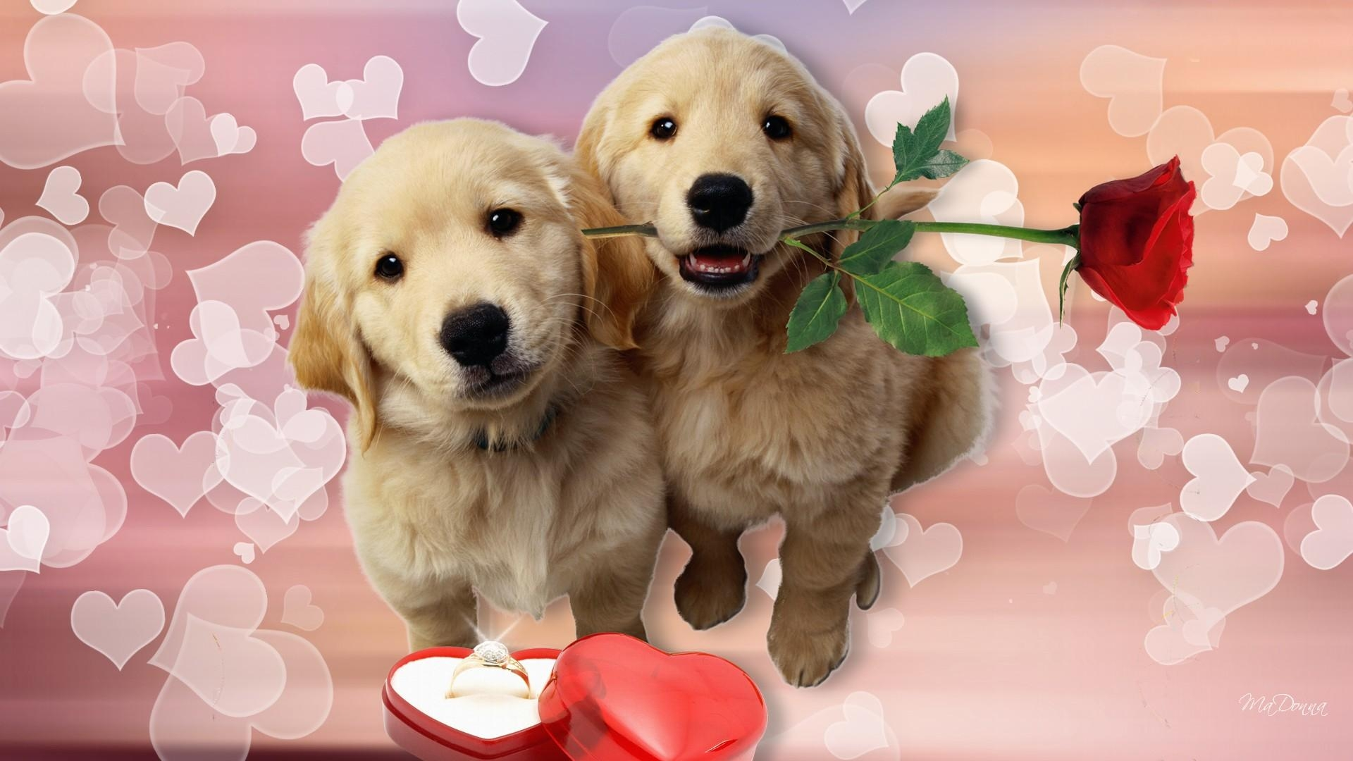 Puppy Love Wallpaper