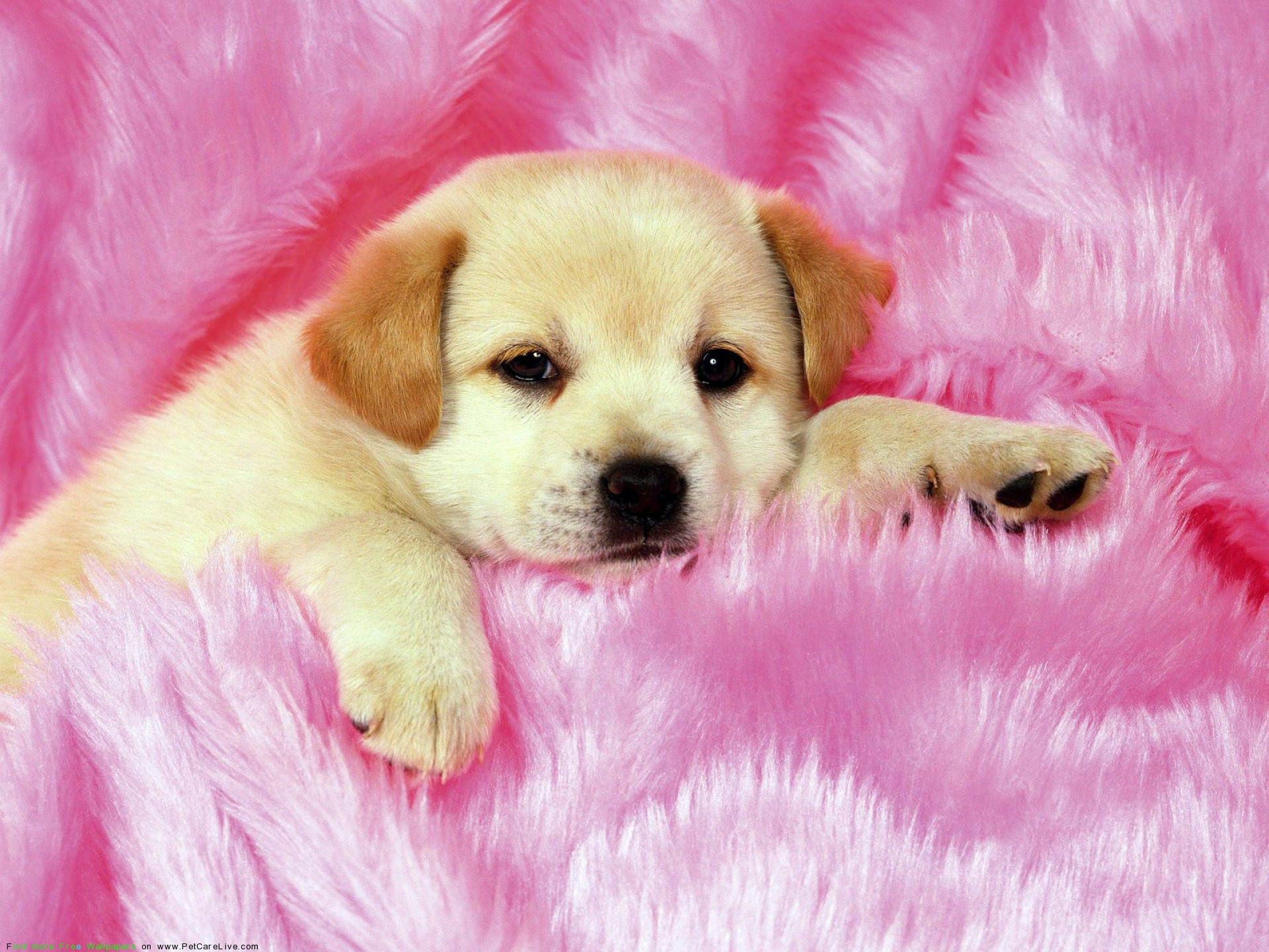 Puppy Wallpaper Free