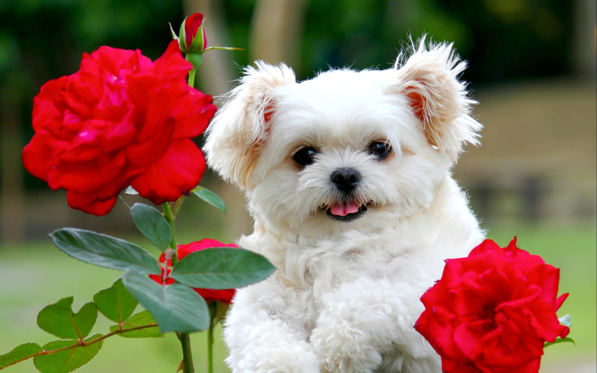 Puppy Wallpapers Free