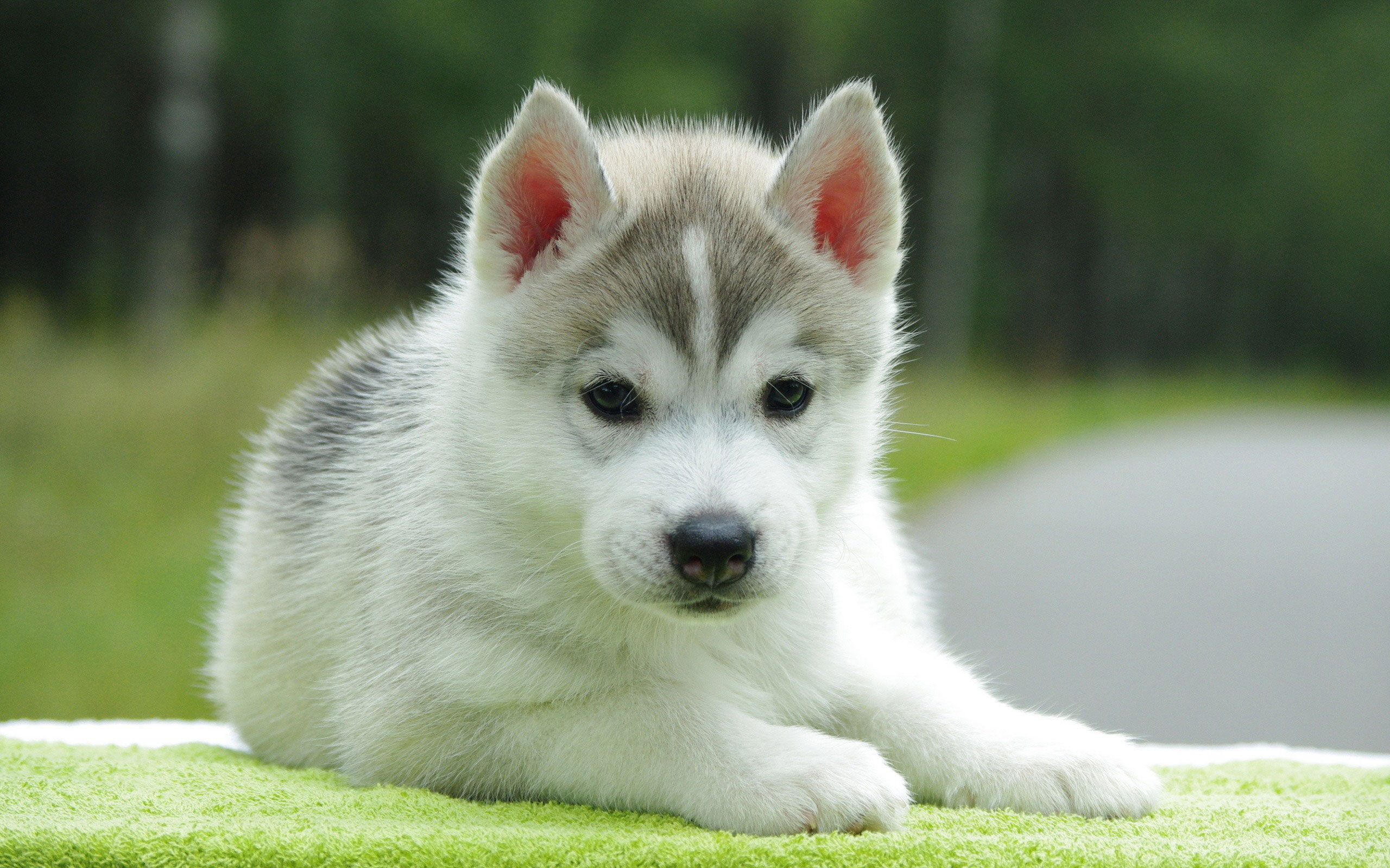 download puppy wallpapers free gallery
