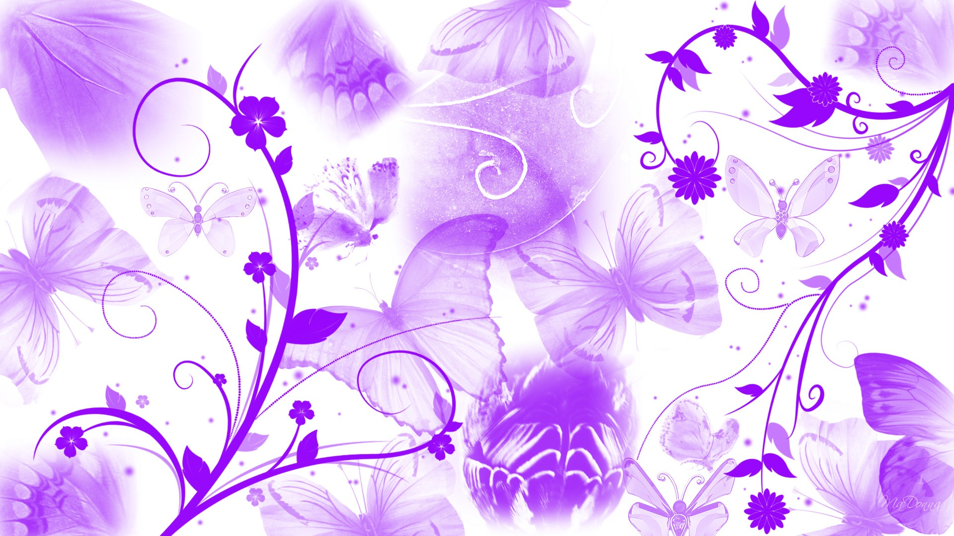 Purple And White Flower Wallpaper