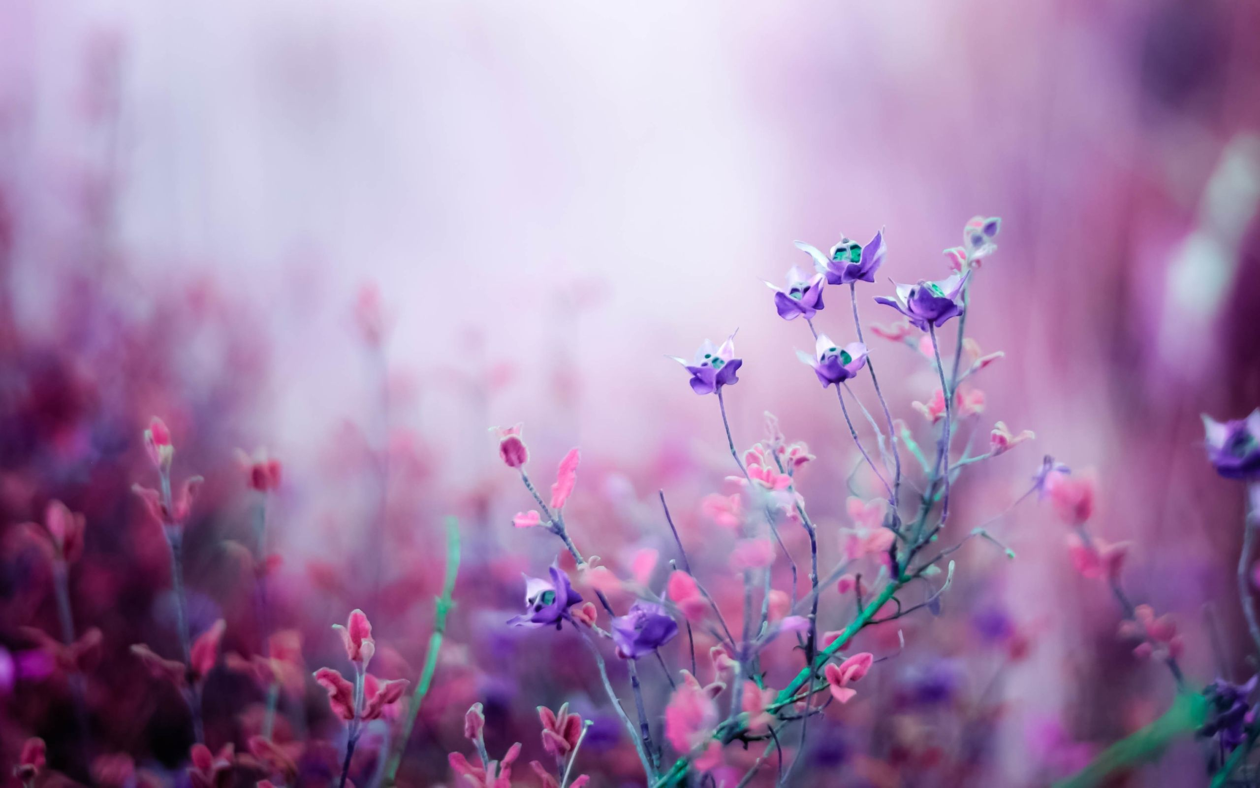 Download purple and white flower wallpaper gallery purple and white flower wallpaper mightylinksfo