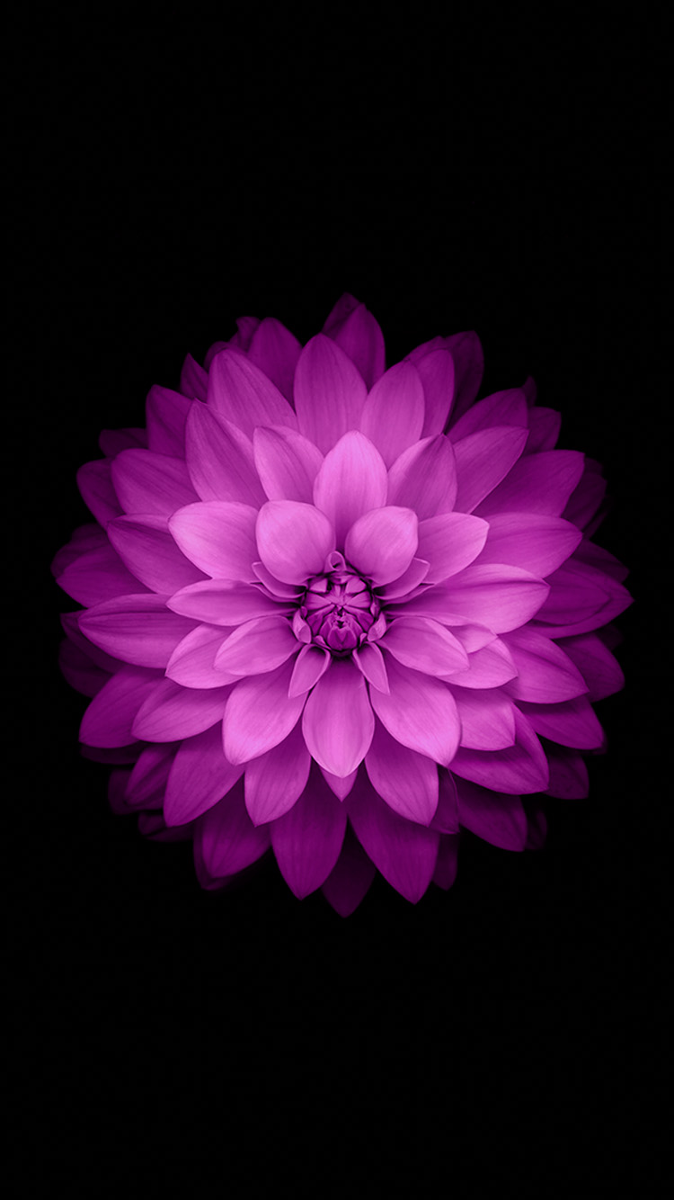 Purple Flower Iphone Wallpaper