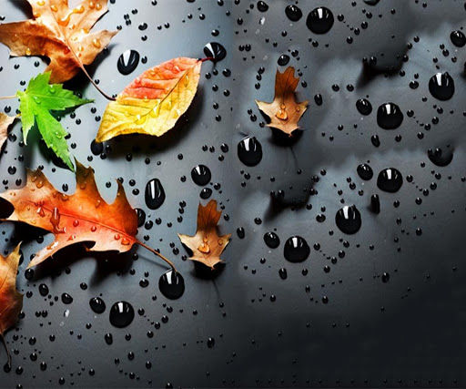 Raindrops Wallpaper Download