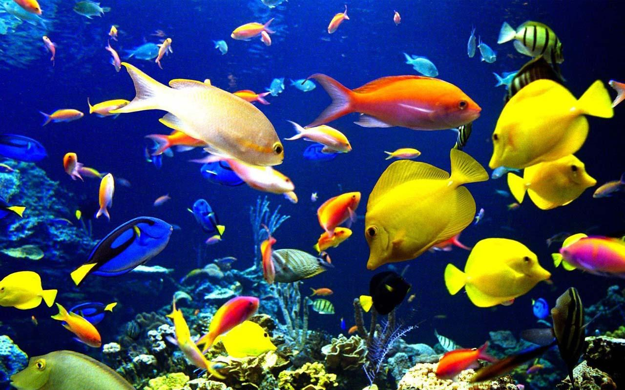 Real Aquarium Live Wallpaper