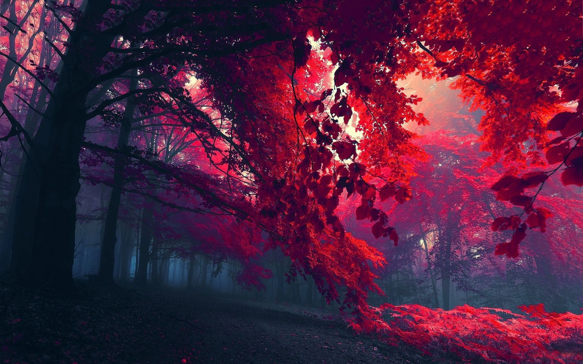 Red Autumn Wallpaper