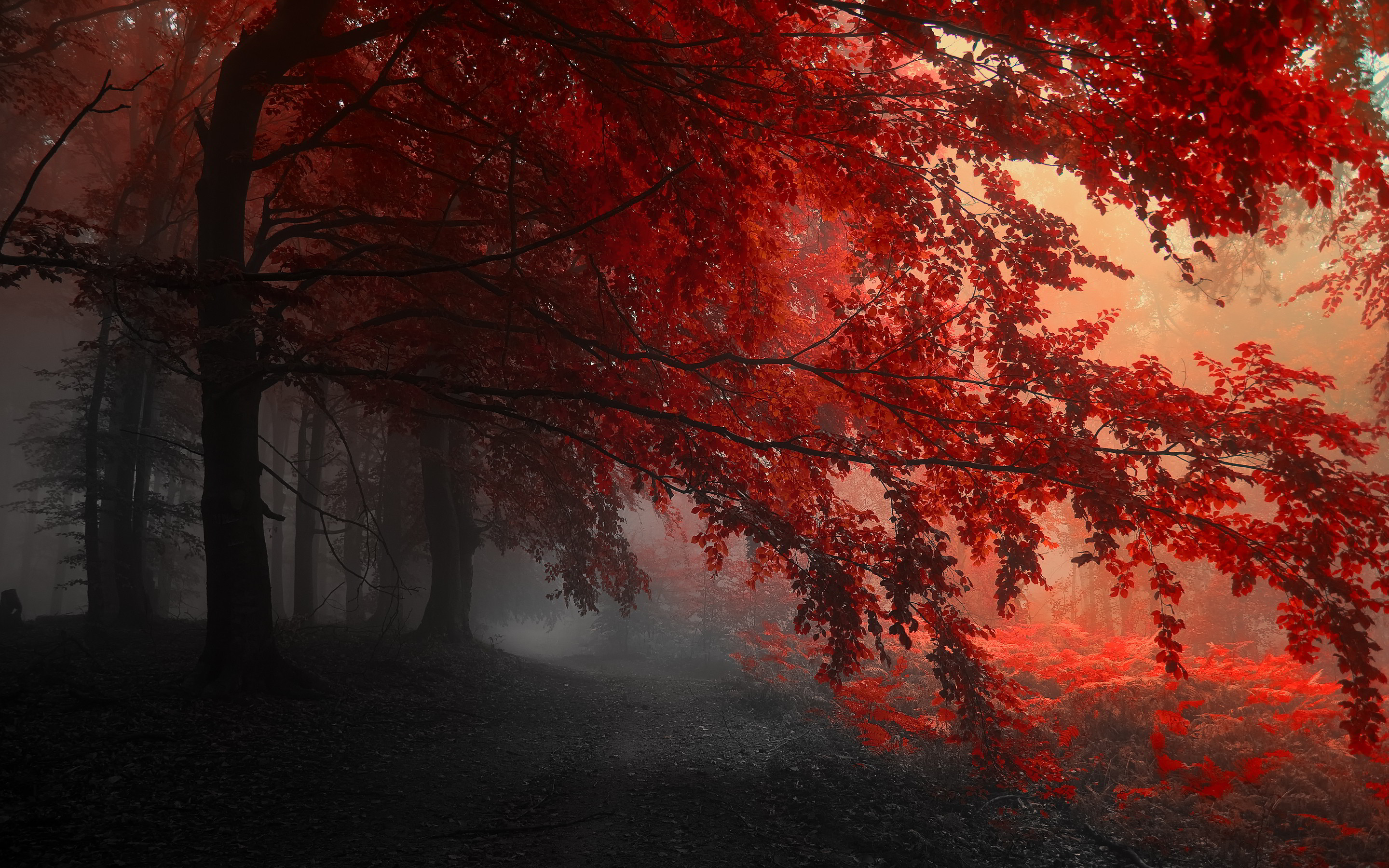 Red HD Wallpapers