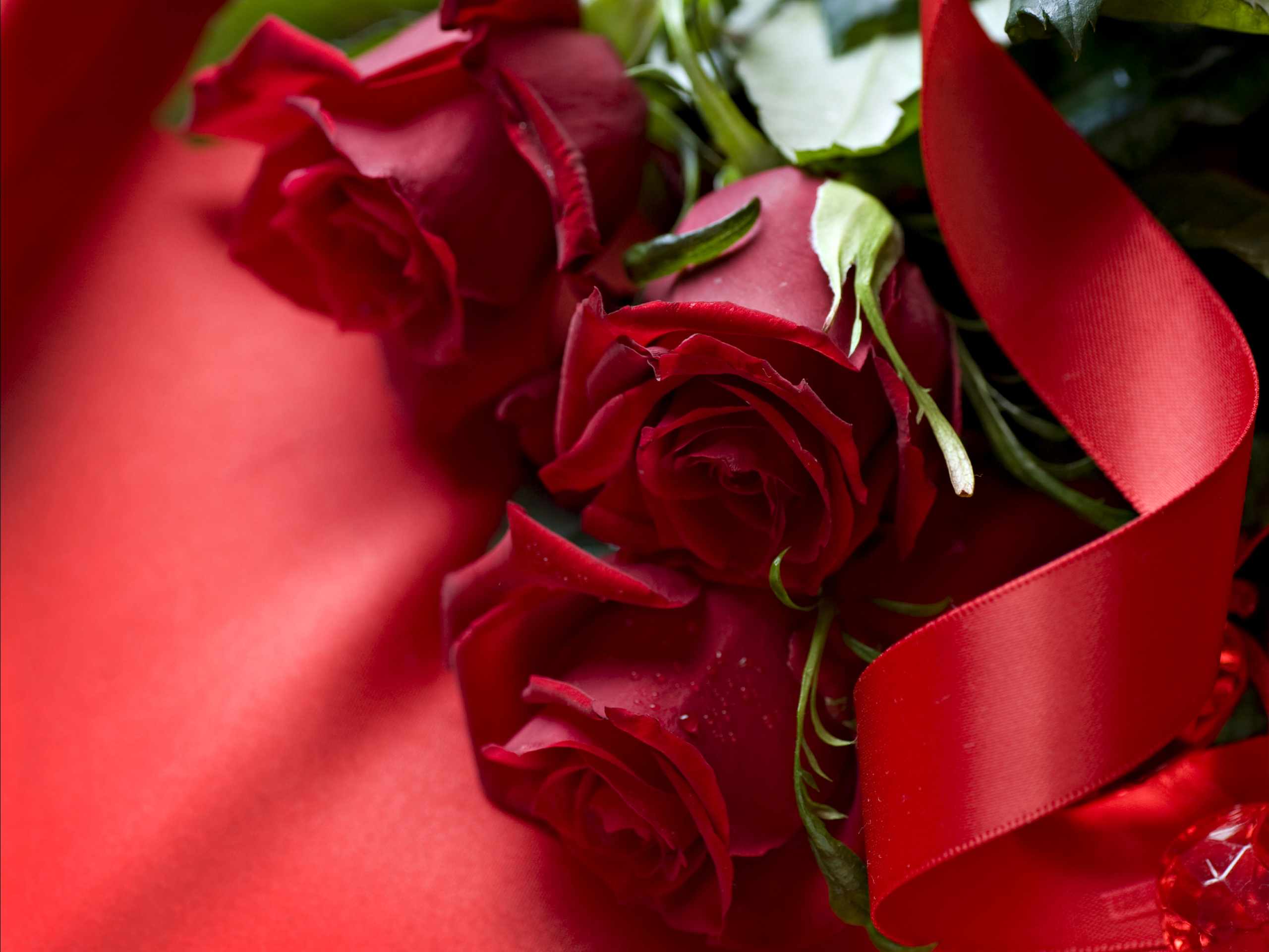 Red Rose 3D Wallpaper