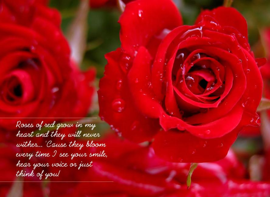 Red Rose Wallpaper With Quotes