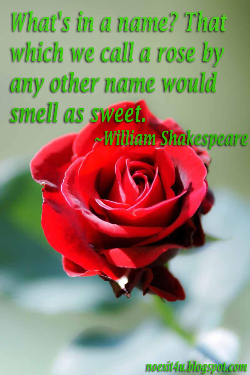 Download Red Rose Wallpaper With Quotes Gallery