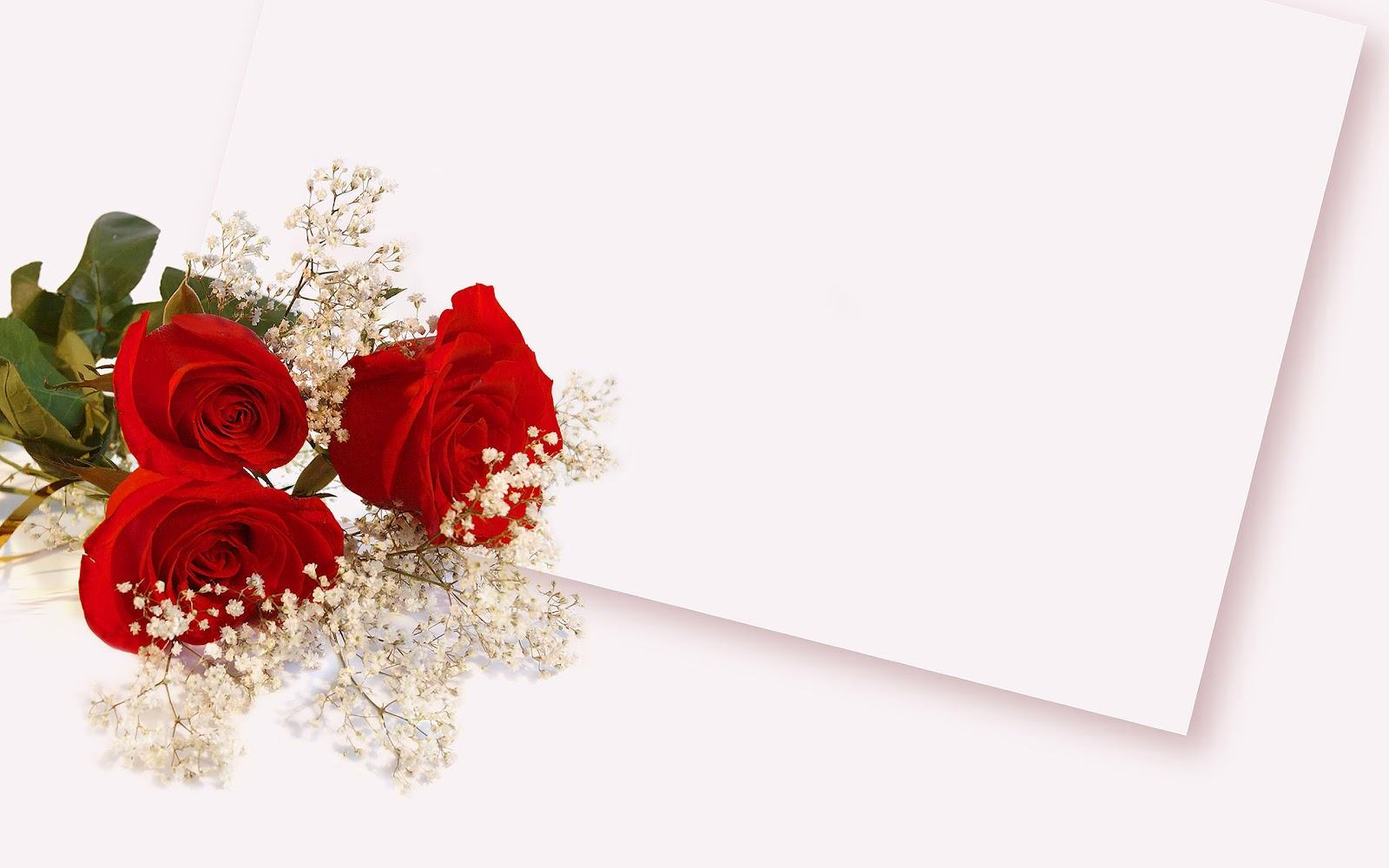 Red Roses Background Wallpaper
