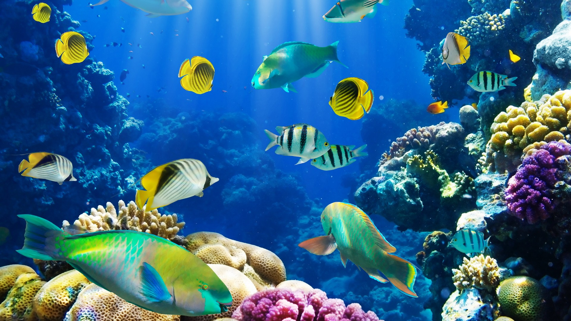 Reef Fish Wallpaper