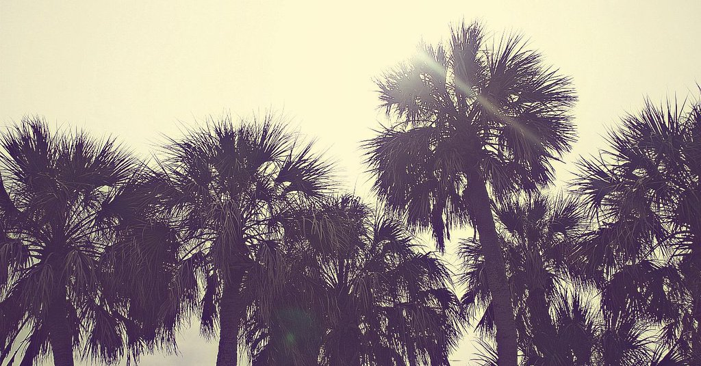 Download Retro Palm Tree Wallpaper Gallery