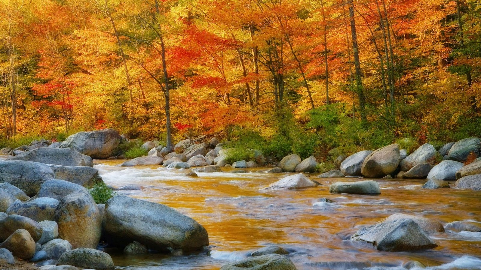 River Nature Wallpaper