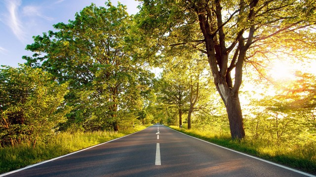 Road Nature Wallpaper