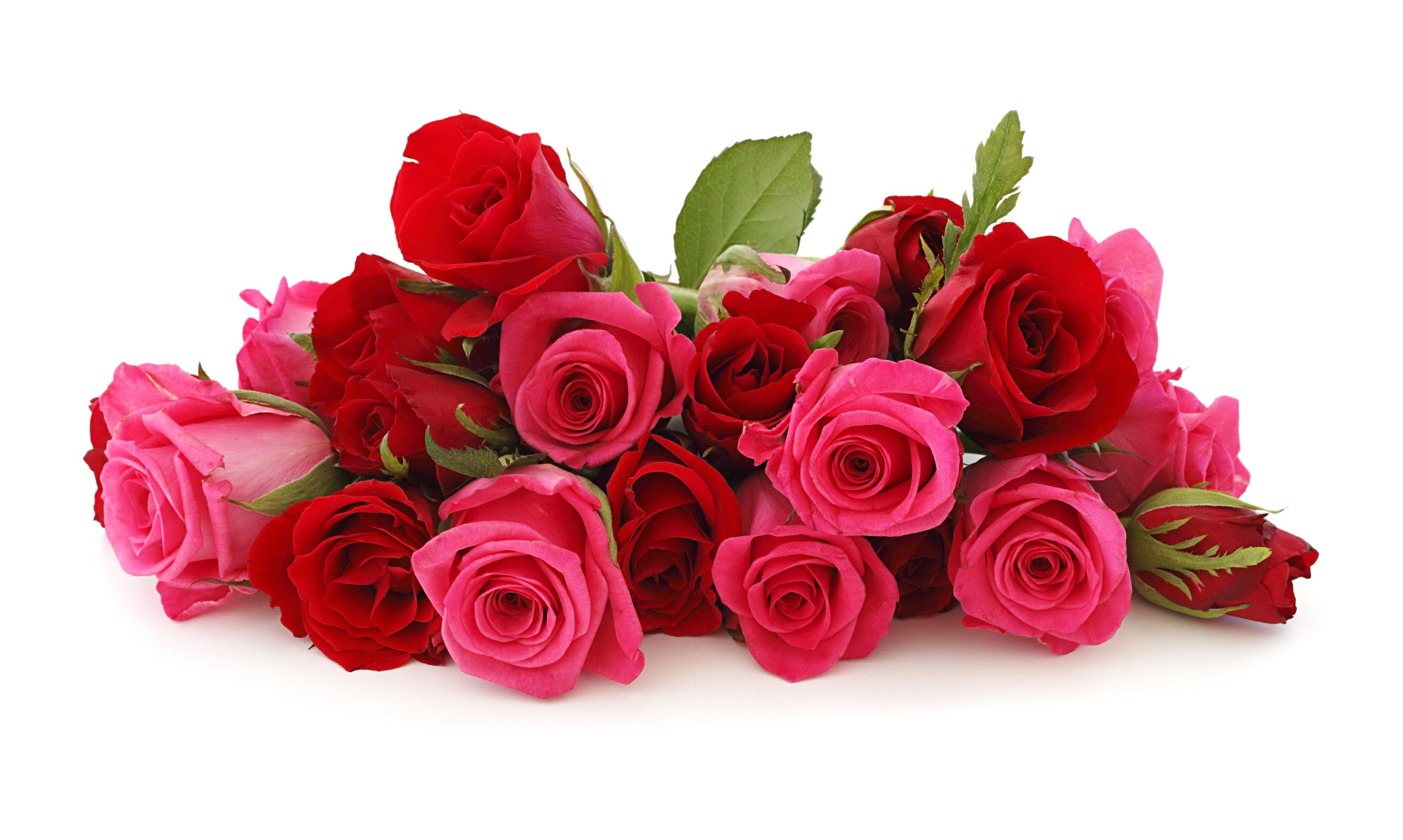 Rose Flower Picture Wallpapers
