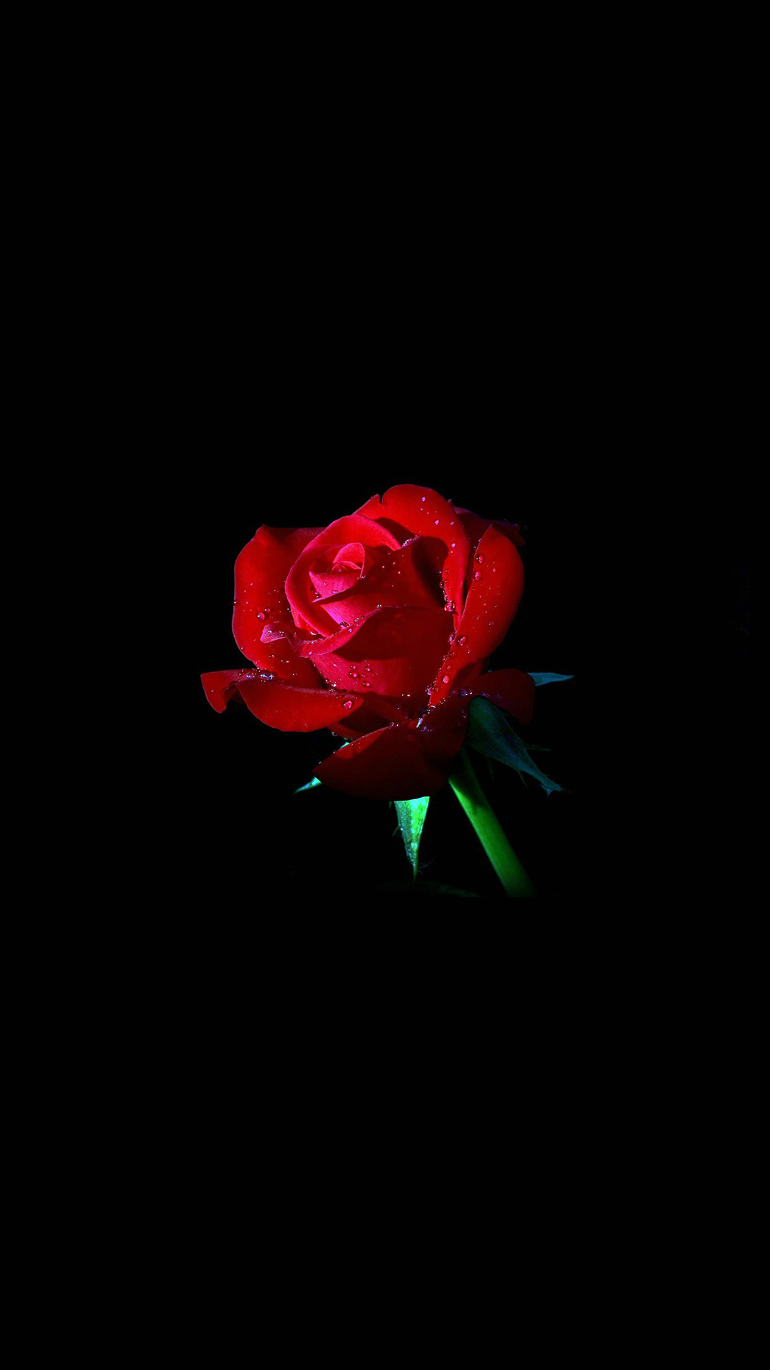 Rose Iphone Wallpaper