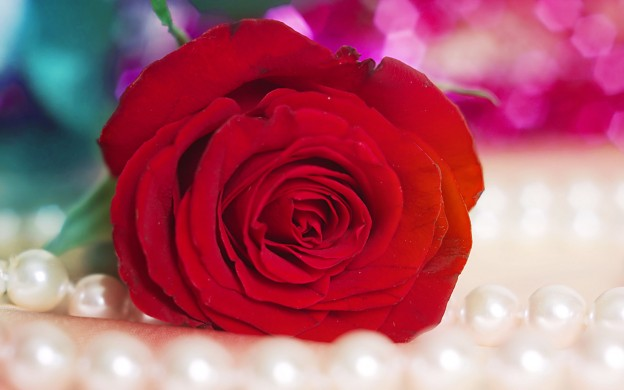Rose Red Flower Wallpaper