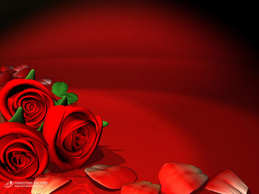 Rose Wallpaper Red