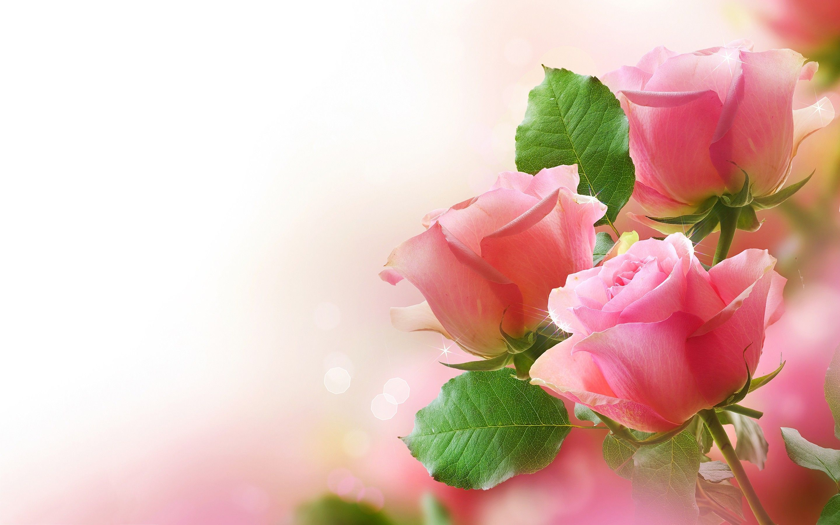 Roses Desktop Wallpapers