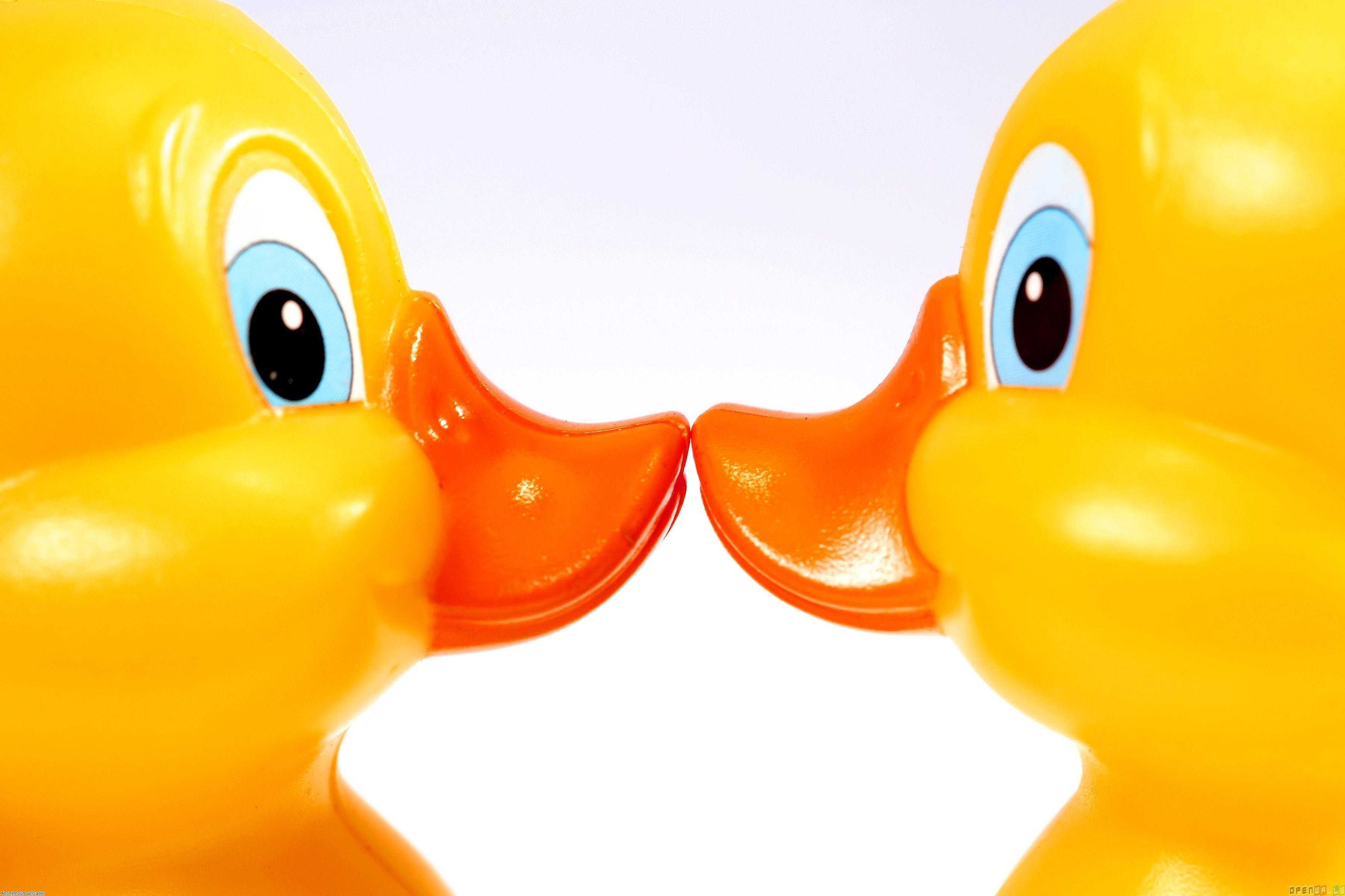 Download Rubber Ducky Wallpapers Gallery